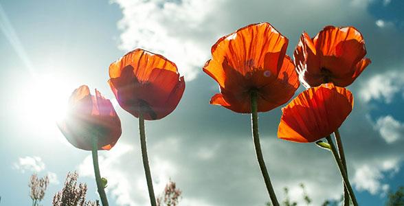 blommor_588x300