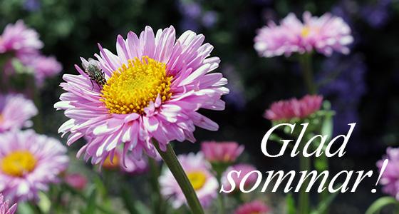 glad_sommar_560
